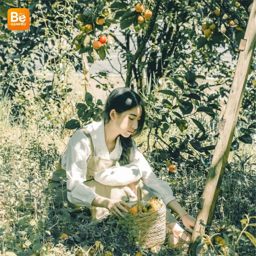 ダラットの「妖精の楽園のような柿畑」-2220