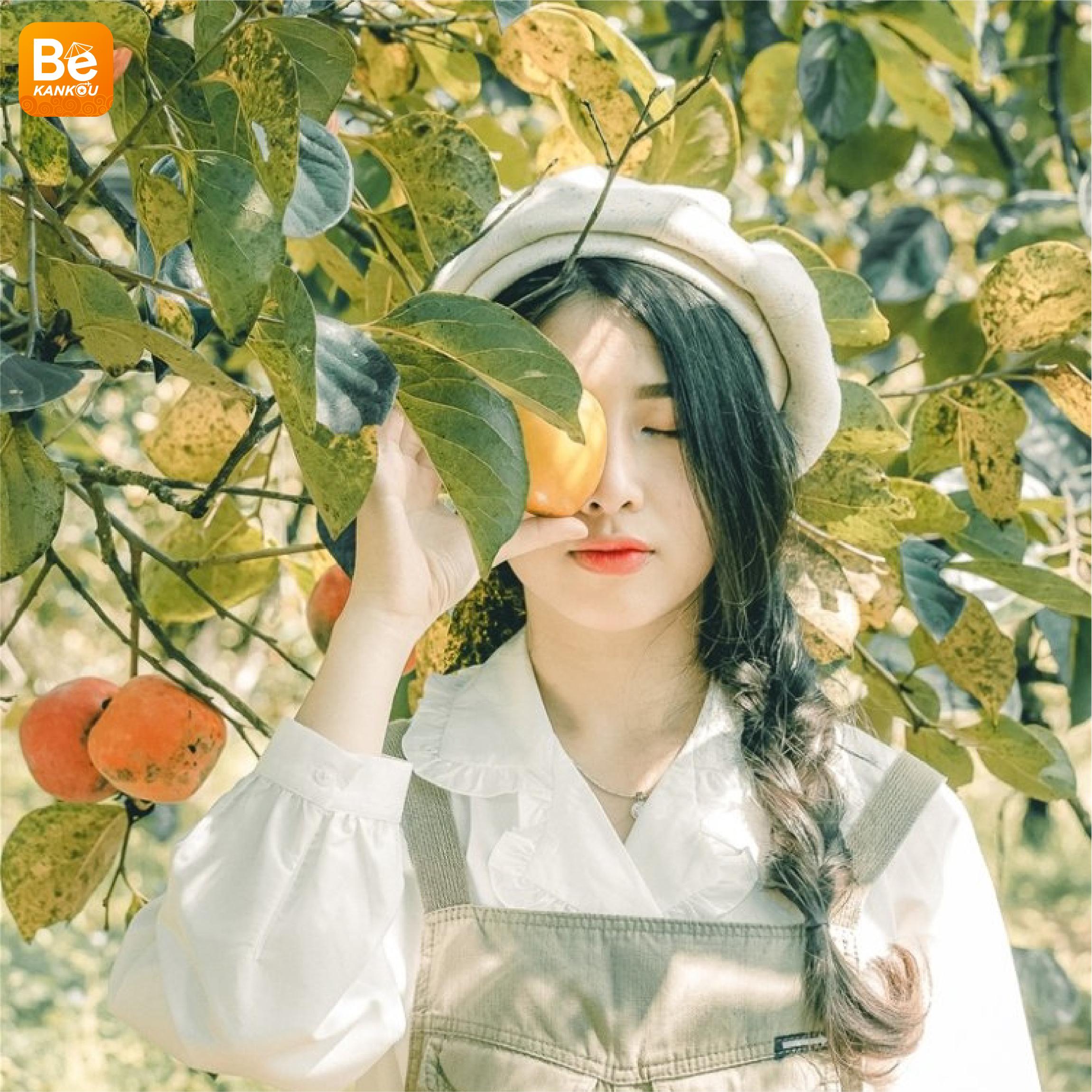 ダラットの「妖精の楽園のような柿畑」-220