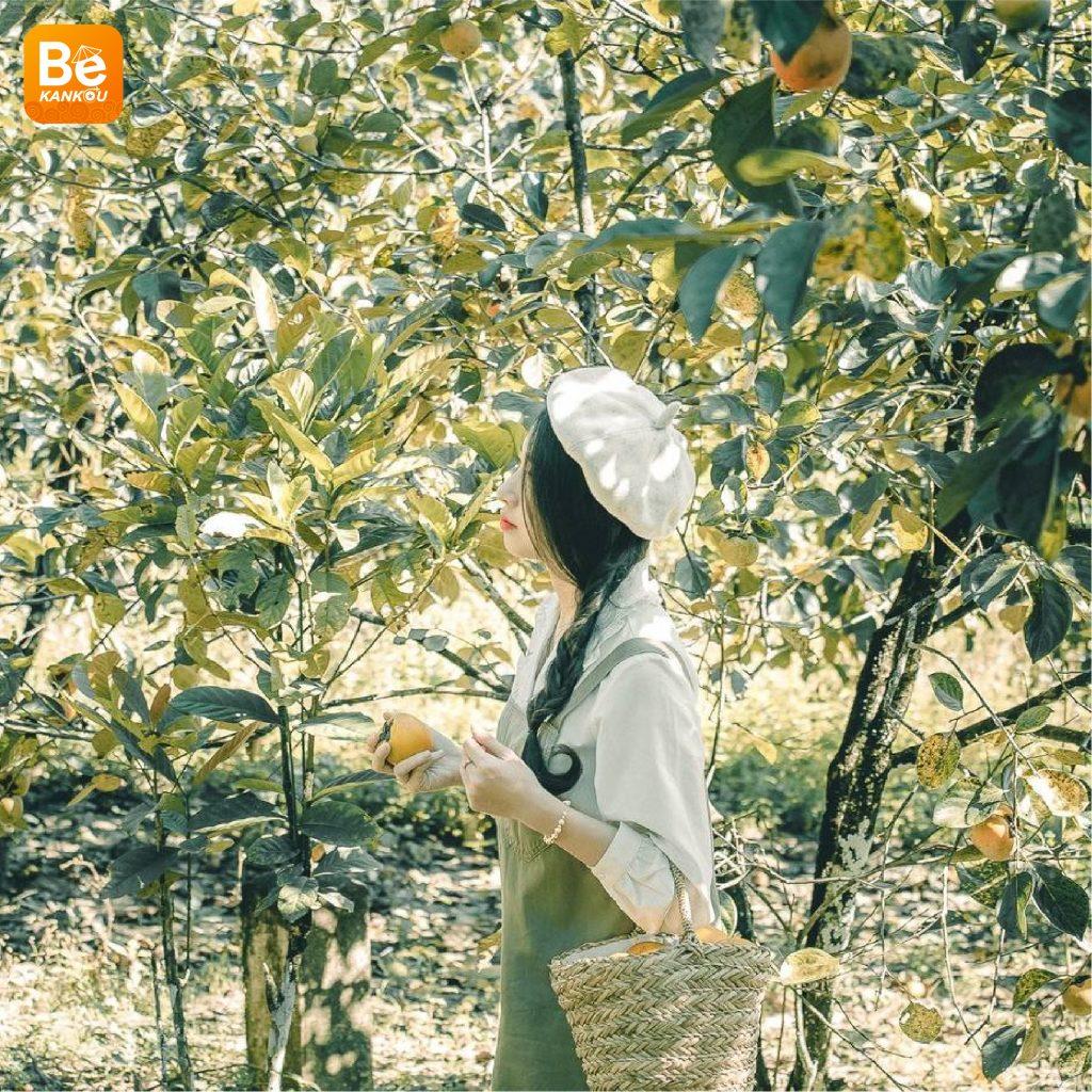 ダラットの「妖精の楽園のような柿畑」-24