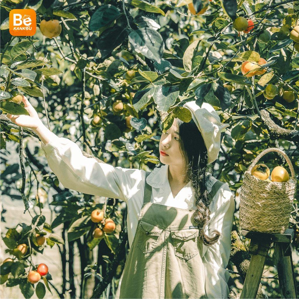 ダラットの「妖精の楽園のような柿畑」-22
