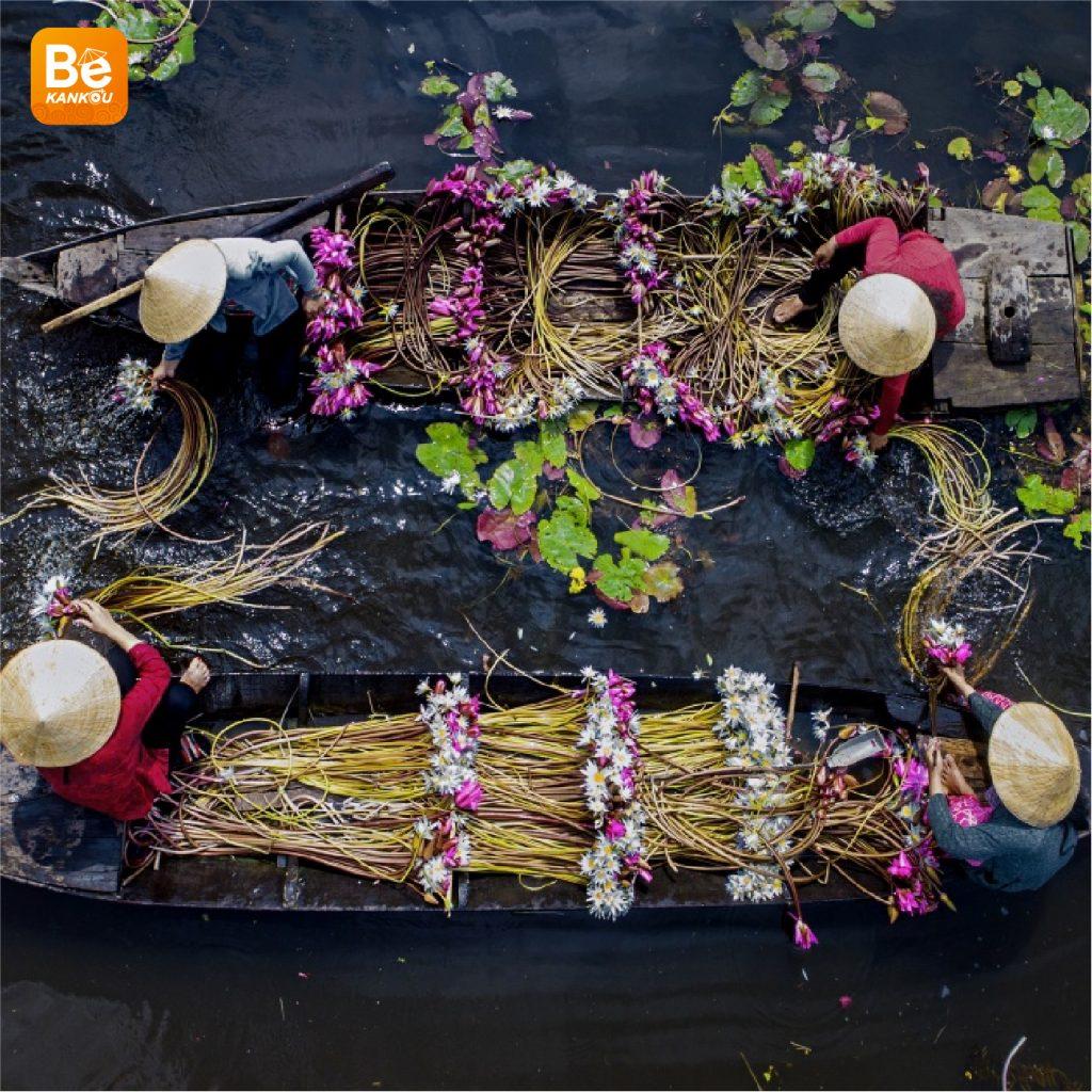 ロンアンの氾濫畑における睡蓮の季節-036