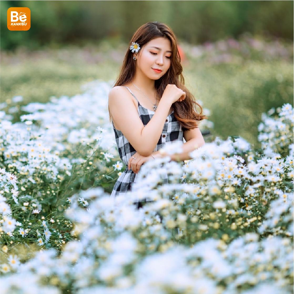 ハノイで最も美しいヒナギクの花園3選-115