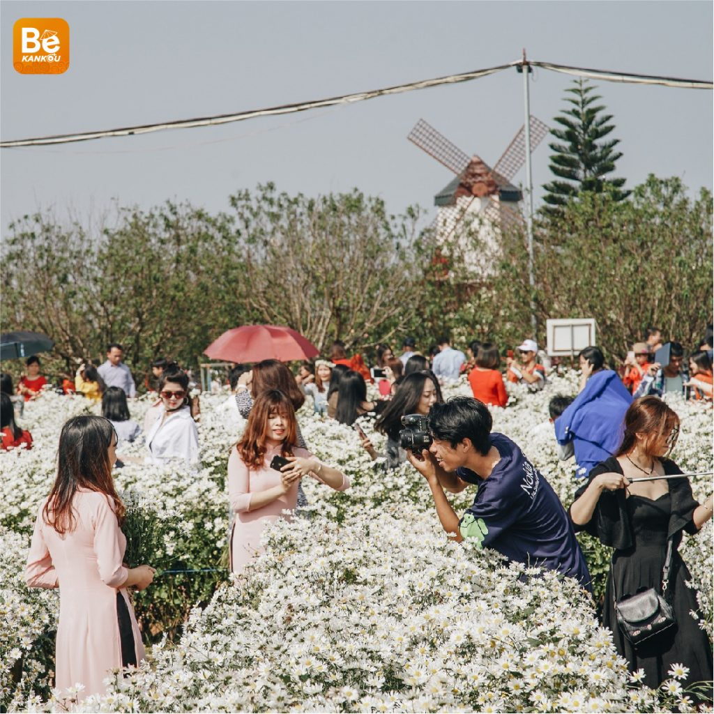 ハノイで最も美しいヒナギクの花園3選-14