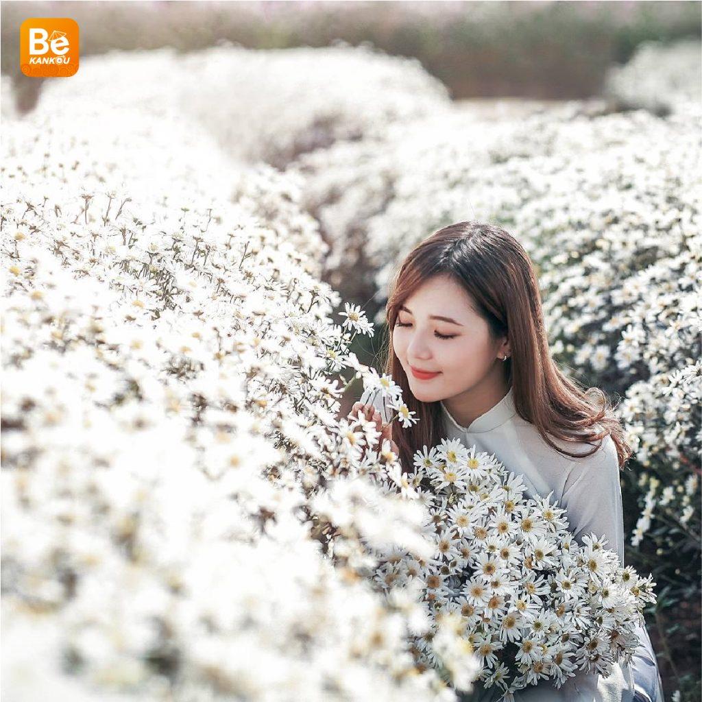 11月には、ハノイのデイジー(ヒナギク)の花に会う予定-16