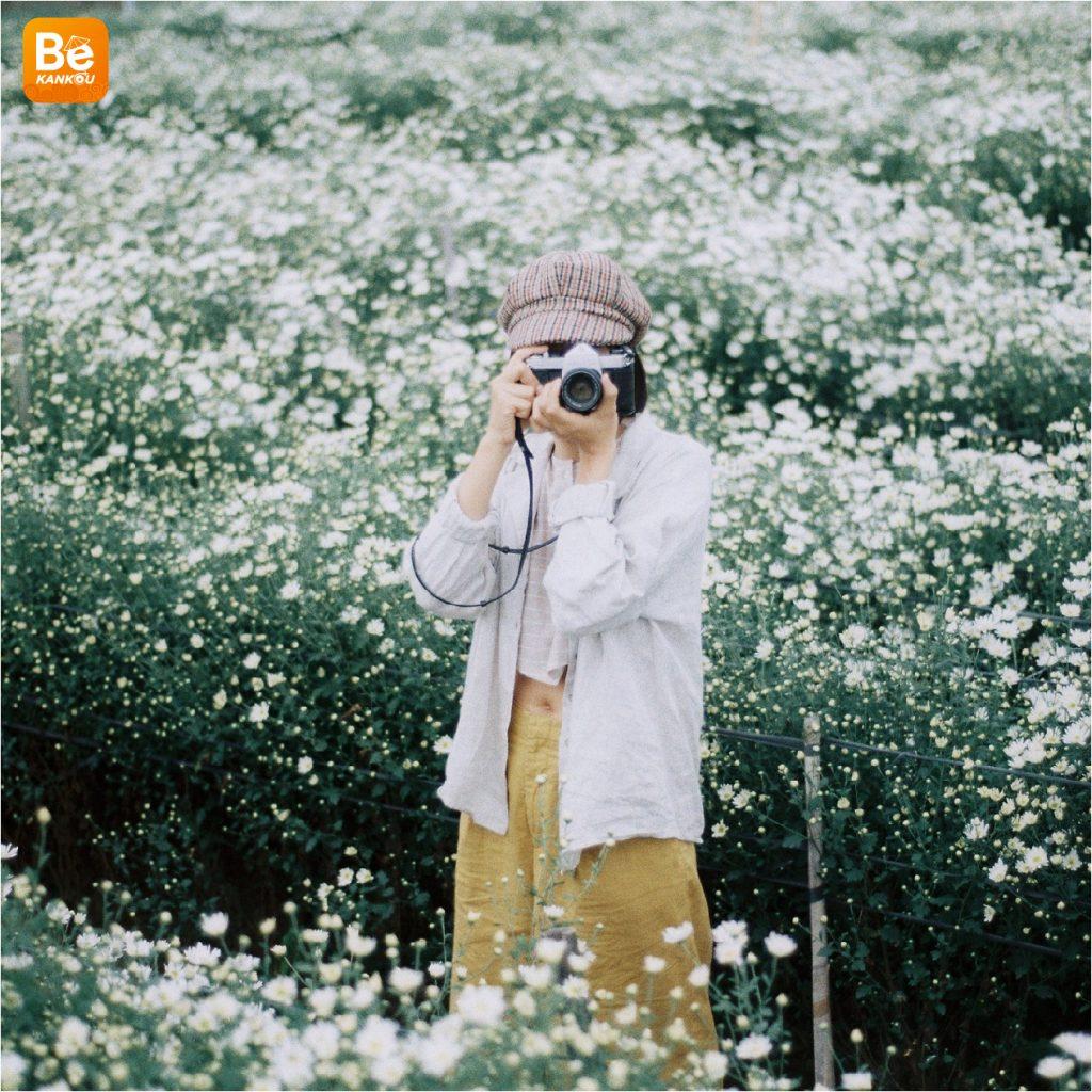 11月には、ハノイのデイジー(ヒナギク)の花に会う予定-1